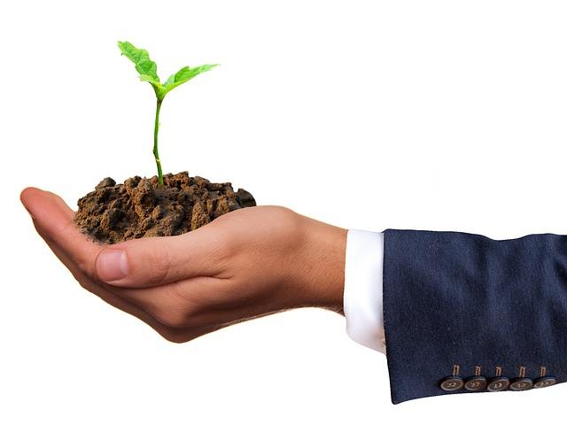 rostlinka na dlani